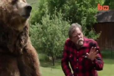 Lutte un grizzly dans le jardin