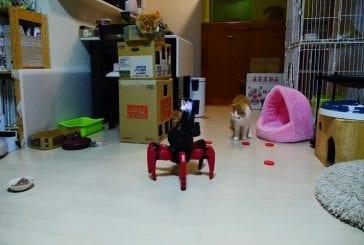 Robot joue avec le chat, chatons terrifie