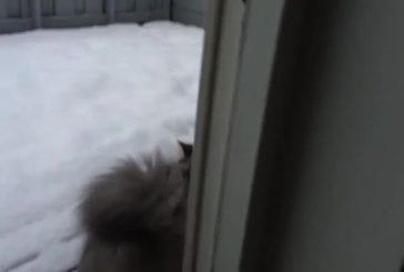 Notre moelleux créature de neige aimer