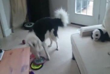 Mon chien adore jouer au frisbee