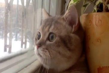 Chat brisée