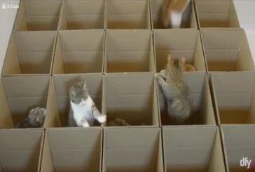 Une famille de chatons jouent dans des boites