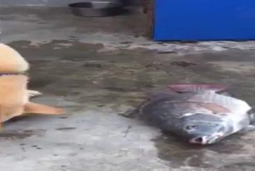 Chien tente de sauver un poisson échoué