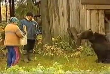 Un ours domestique en Russie