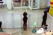 Chien dans une animalerie trépigne d'impatience de trouver son maître