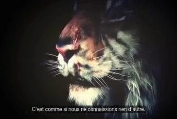 La terrible vie des animaux de cirque