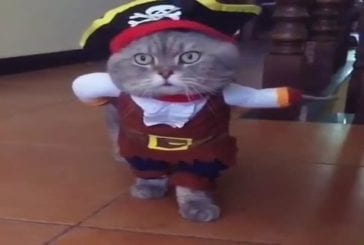 Le chat pirate